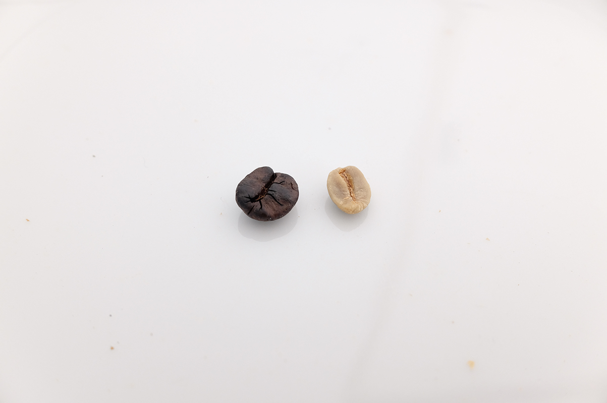 焙煎前と焙煎後のコーヒー豆の大きさの違い