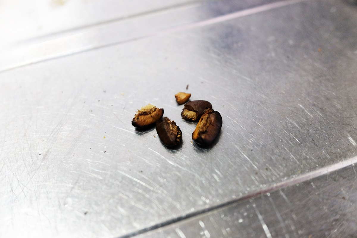 粉砕されたコーヒー豆