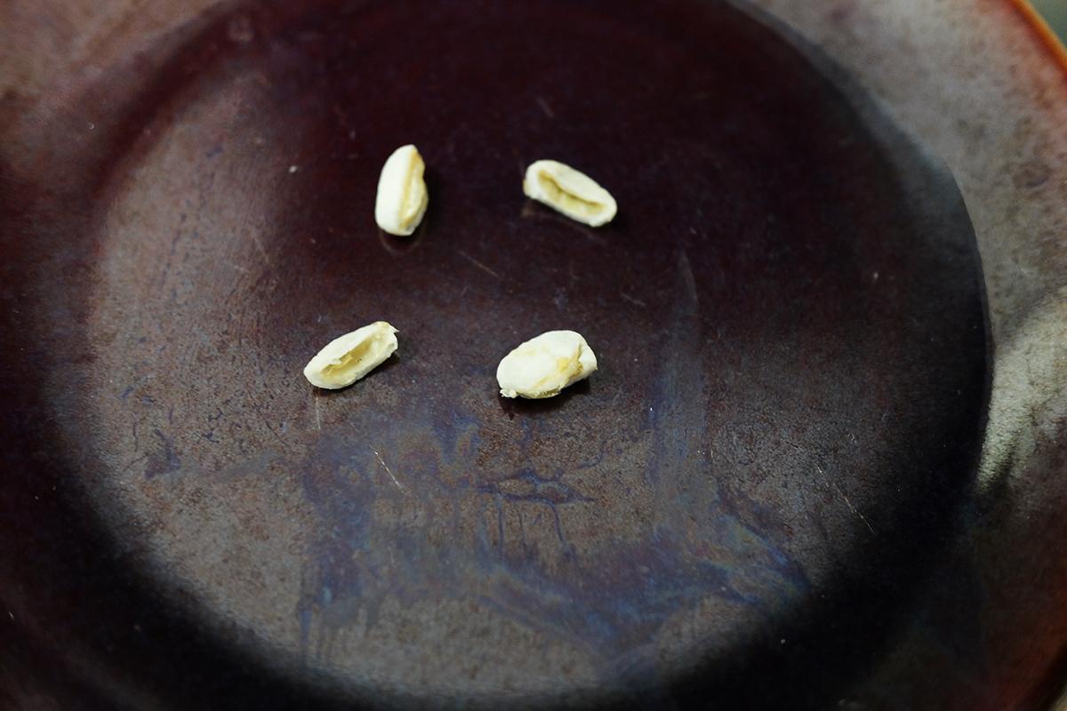 半分に割いた10分間茹でたコーヒー豆